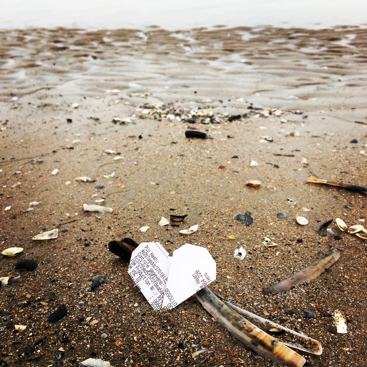 Corazon de Papel - Coquillage